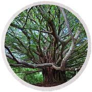 Banyan Tree Round Beach Towel by James Roemmling