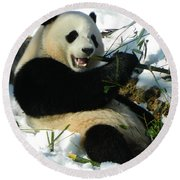 Bao Bao Sittin' In The Snow Taking A Bite Out Of Bamboo2 Round Beach Towel
