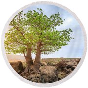 Round Beach Towel featuring the photograph Baobab Tree by Alexey Stiop
