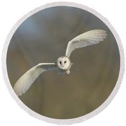 Barn Owl Hunting In Worcestershire Round Beach Towel