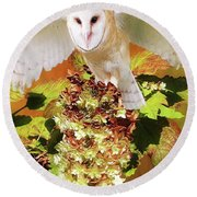 Barn Owl In Crape Myrtle Round Beach Towel by Suzanne Handel