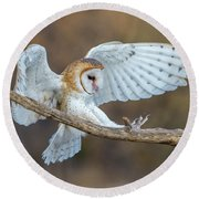 Barn Owl In Flight Round Beach Towel