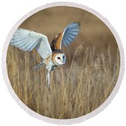 Barn Owl In Grass Round Beach Towel