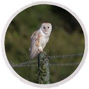Barn Owl On Ivy Post Round Beach Towel