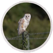 Barn Owl On Ivy Post Round Beach Towel