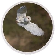 Barn Owl Wings Round Beach Towel