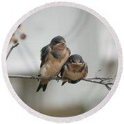 Barn Swallow Fledglings Round Beach Towel