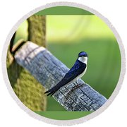 Barn Swallow Looking Angry Round Beach Towel by Ronda Ryan