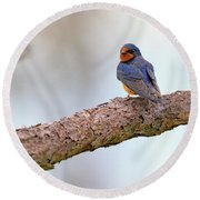 Barn Swallow On Assateague Island Round Beach Towel by Rick Berk