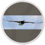Barnacle Goose Round Beach Towel