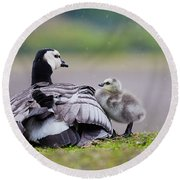Barnacle Goose With Chick In The Rain Round Beach Towel