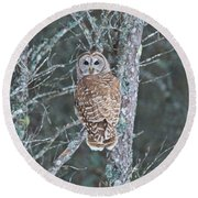 Barred Owl 1396 Round Beach Towel