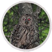 Round Beach Towel featuring the photograph Barred Owl 3 by Glenn Gordon