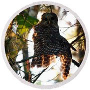 Barred Owl At Sunrise Round Beach Towel