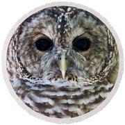 Barred Owl Closeup Round Beach Towel