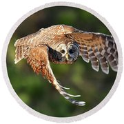 Barred Owl Flying Toward You Round Beach Towel