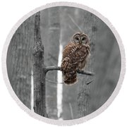 Barred Owl In Winter Woods #1 Round Beach Towel