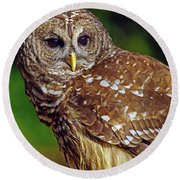 Barred Owl Round Beach Towel by Larry Nieland