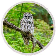 Barred Owl Round Beach Towel by Michael Cinnamond