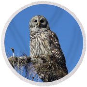 Barred Owl Portrait Round Beach Towel