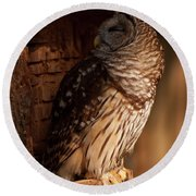 Round Beach Towel featuring the digital art Barred Owl Sleeping In A Tree by Chris Flees