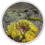 Round Beach Towel featuring the photograph Barrel Cactus Super Bloom by Peter Tellone