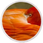 Bashful Flamingo Round Beach Towel