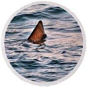 Basking Shark In July Round Beach Towel