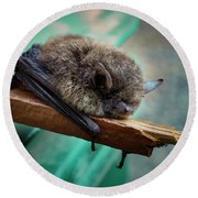 Round Beach Towel featuring the photograph Bat Rehoused by Jean Noren