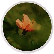 Round Beach Towel featuring the photograph Bathed In Light by Debby Pueschel