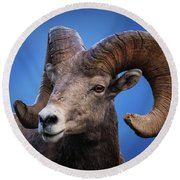 Battle Worn Bighorn Sheep Round Beach Towel
