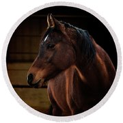 Bay Arabian Mare 2 Round Beach Towel