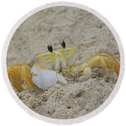 Beach Crab In Sand Round Beach Towel by Randy Steele