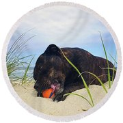 Round Beach Towel featuring the photograph Beach Dog - Rest Time By Kaye Menner by Kaye Menner