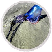 Beached Jellyfish 000 Round Beach Towel