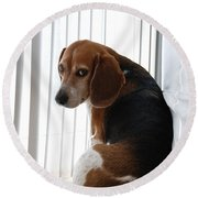 Beagle Attitude Round Beach Towel