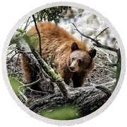 Round Beach Towel featuring the photograph Bear In Trees by Scott Read