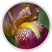 Bearded Iris Flower Mary Todd Round Beach Towel