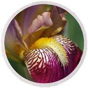 Bearded Iris Flower Mary Todd Round Beach Towel