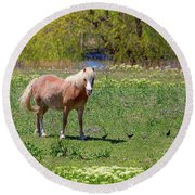 Beautiful Blond Horse And Four Little Birdies Round Beach Towel by James BO Insogna