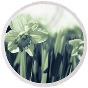 Beautiful Daffodil Round Beach Towel