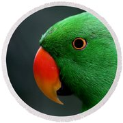 Beautiful Eclectus Parrot Round Beach Towel