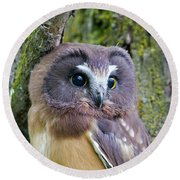 Beautiful Eyes Of A Saw-whet Owl Chick Round Beach Towel