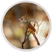 Beautiful Female Cardinal Round Beach Towel