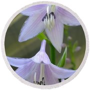Beautiful Hosta Blooms  Round Beach Towel