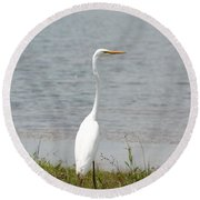 Beautiful Male Egret Round Beach Towel by Maria Urso