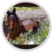 Beautiful Mustang Stallion Round Beach Towel