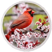 Beautiful Northern Cardinal Round Beach Towel