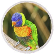 Beautiful Perched Mccaw On A Branch. Round Beach Towel