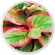 Round Beach Towel featuring the photograph Beautiful Red Aglaonema by Ray Shrewsberry